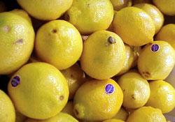 Limun na srpskom tržištu bezbjedan za upotrebu