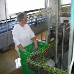 Prehrambena industrija RS strahuje od potpunog sloma