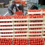 U prodaji paradajz sa ukusom hemije