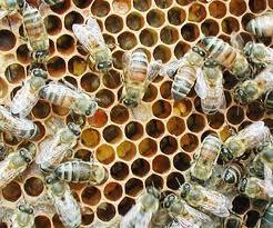 Subvencije za voćare, pčelare i povrtare