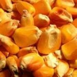 Očekuje se proizvodnja oko 40.000 tona sjemenskih žitarica