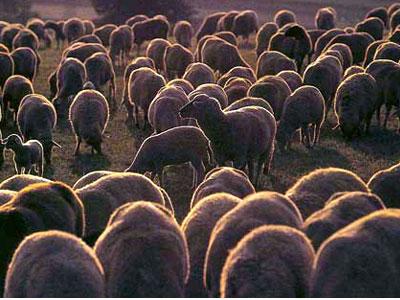 Nevesinje: Ministarstvo poljoprivrede nadoknađuje štetu za stoku