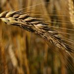 Izvoz agroindustrijskog sektora prošle godine veći za 16,13 odsto