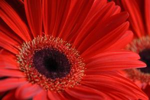 Novi Pravilnik o registraciji uzgajivača cvijeća