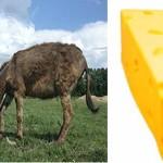 "Đoković: ""Nismo kupili sav magareći sir"""