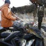 Hrvatski ribari pripremaju se za EU