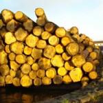 Povećana proizvodnja i prodaja drvnih sortimenata