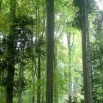 Gubar napao šume u Srbiji