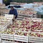 25 miliona kilograma jabuka propada