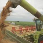 Izvoz žita – prijetnja