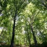 Obnova privatnih šuma