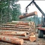 Manja proizvodnja, veća prodaja šumskih sortimenata