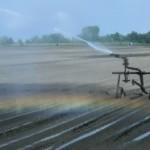 Suša nosi 1.000 evra po hektaru