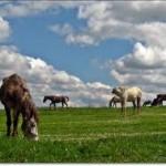 Mirjanić: Riješiti se viška lipicanera
