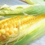 Prinos kukuruza manji za 70 odsto