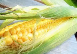 Srbija izvezla kukuruz za 38 mil.$