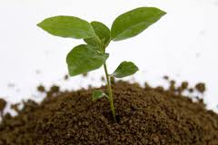 PKB fabrika za doradu sjemena dobija najsavremeniju sušaru