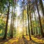 Petina svjetskih šuma pripada Rusima