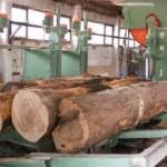 Veća proizvodnja i prodaja šumskih sortimenata