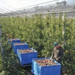 Moguć veći izvoz voća i povrća