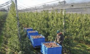 Proizvode tonu voća po glavi stanovnika