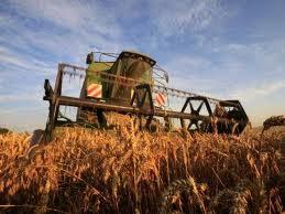 """Počeli """"Dani polja strnih žita"""""""