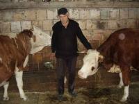 Proizveli 167.000 litara mlijeka