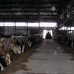 Moguća proizvodnja od milion i po litara mlijeka godišnje