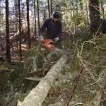 Šume RS oštećene za dva miliona KM