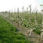 Nedostatak padavina uticati na prinose u voćnjacima