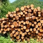 Oduzeto oko 1.036 metara kubnih drvnih sortimenata