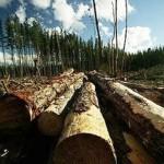 Odsustvo zakona – prijetnja šumama!?
