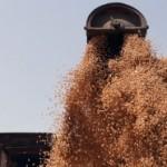 Ratari bez tržišnih viškova hljebnog žita