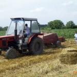 Proizvedeno oko 30 tona sjemena krmnog bilja