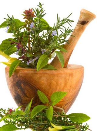 Predavanje o uzgoju ljekovitog i medonosnog bilja