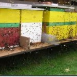 Pčelarstvo učiniti profitabilnim