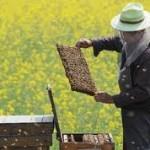 Podsticaji razvoju pčelarstva i proizvodnji ovaca