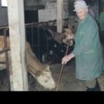 Proizvedu više od 100.000 litara mlijeka