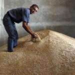 Poljopriovrednici u Srbiji nezadovoljni otkupnom cijenom pšenice