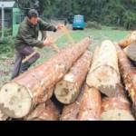 Četiri šumska gazdinstva potražuju devet miliona