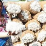 Ukinute restrikcije izvoza indijskog pamuka