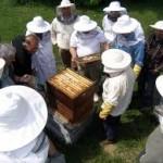 Upis u evidenciju pčelara do 1. juna