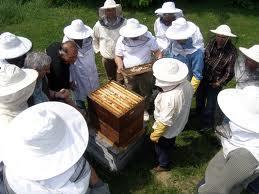 Knežević: Podsticaji za 18 pčelara