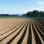 Bugarin: Država da pomogne sjetvu