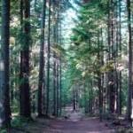 Planirano pošumljavanje 49 hektara