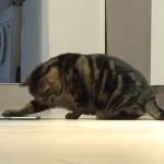 Mačka zavisna od iPada