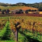 Vino-Župi odobrili kredit od 12 mil. evra