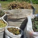 Srbija izvezla bilja za 5,7 miliona dolara