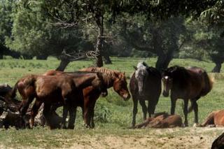 BiH dozvoljen izvoz registrovanih konja