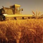 Poljoprivreda Srbije u suficitu 992 mil. €